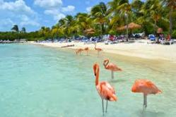 image.pelicans
